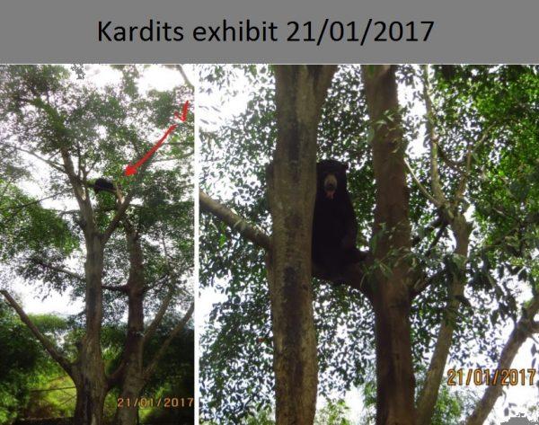 Kardits exhibit 2