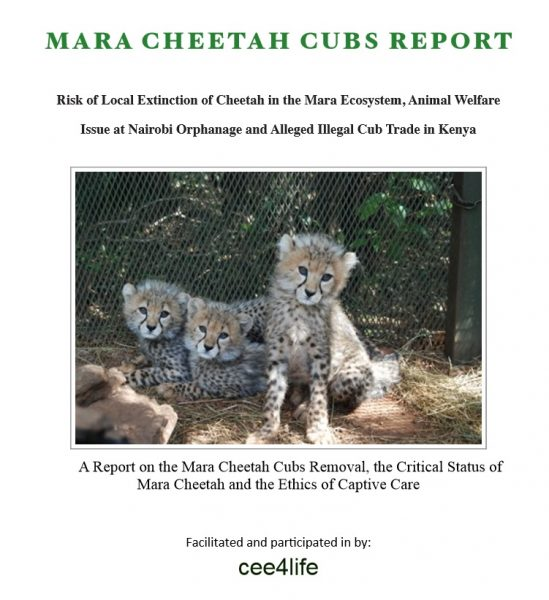 Mara Cheetah Cubs